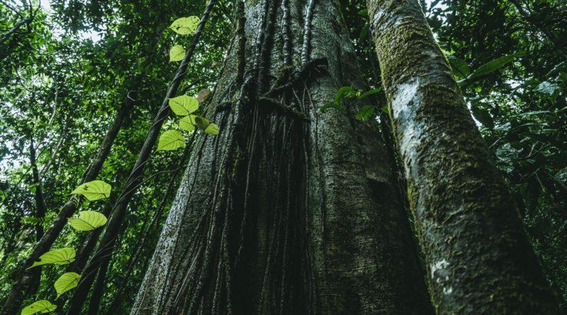 Dia Mundial do Meio Ambiente: reflexões e resultados dos impactos negativos de ações na Terra